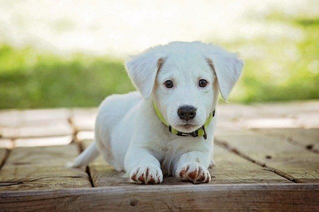 puppy-1903313_640 (1)