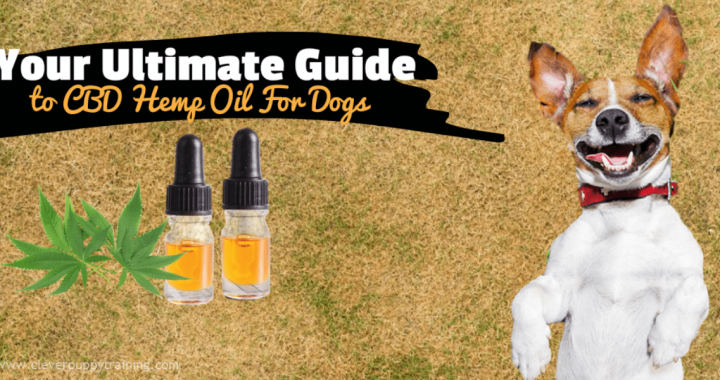 CBD-Hemp-Oil-for-Dogs_1200-600