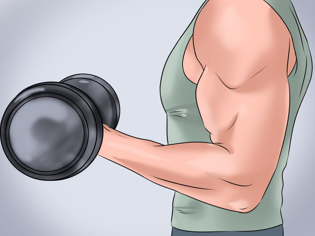 Muscle To Turn Into Fat
