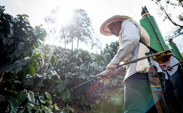 Colombian farmer working at a coffee farm fumigating the crop - agriculture concepts